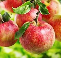 Organic Apples 5-600g